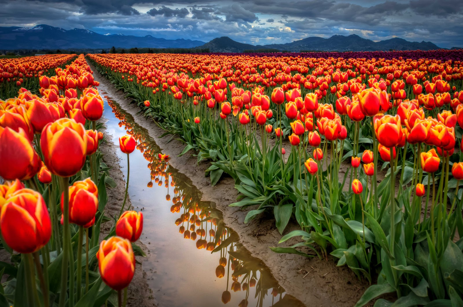 most beautiful spring wallpapers free download free all