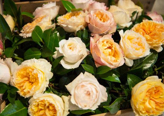 Rosas en la presentación de Weleda