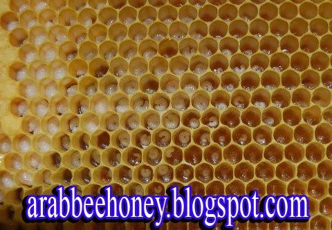 فيديو-الرياضيات -لماذا خلية نحل العسل سداسية الشكل ؟ Honeycombs Hexagonal