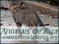 Animais de Rua - Projecto de Esterilização e Protecção de Animais Sem Lar