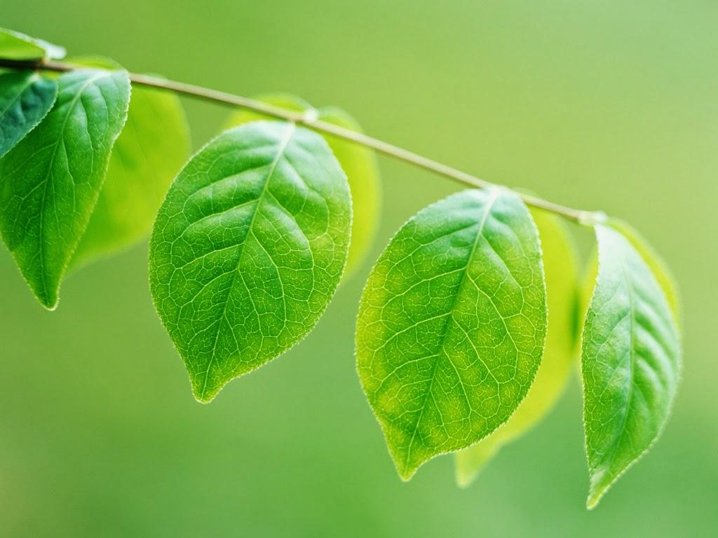 As folhas e suas funções