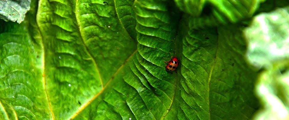 [Photography] Ladybird Unggas Kecil Yang Menarik