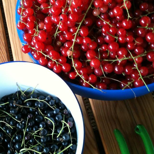 redcurrant harvest blackcurrant jam cooking preserving ribizli befőzés szüret