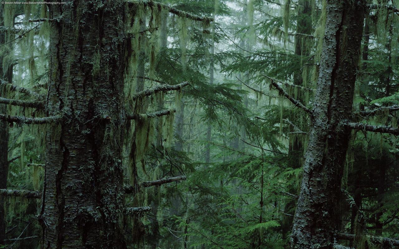 Wallpaper DB: rainforest hd