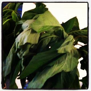 a bunch of callalloo greens