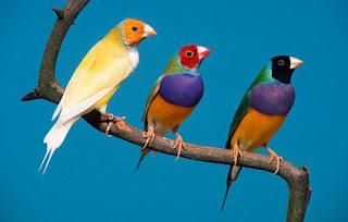 %D8%B7%D9%8A%D9%88%D8%B140 صور رمانسية طبيعية لأجمل الطيور 2014