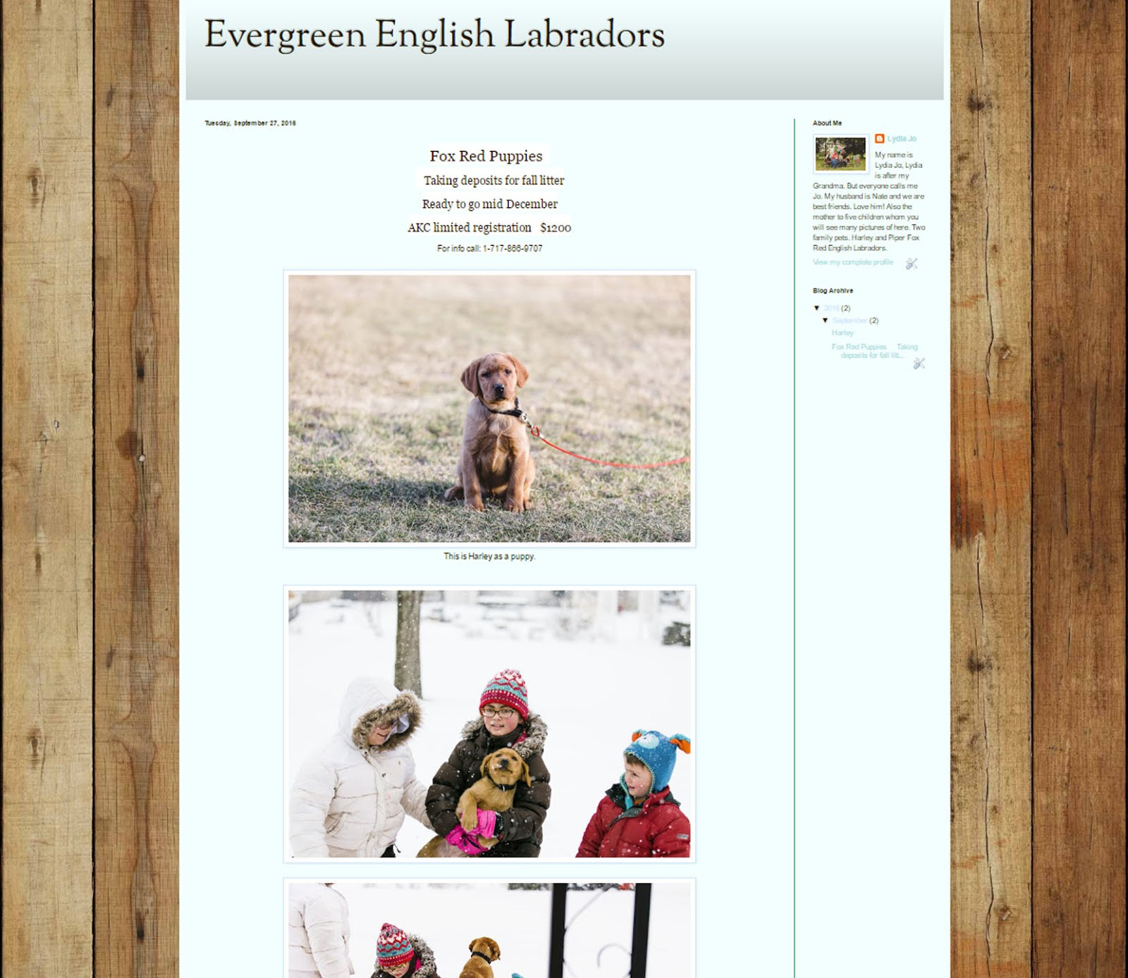 Evergreen English Labradors