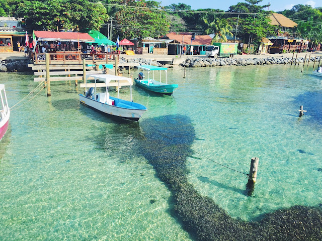 roatan hondurus, cruise stops in the caribbean, where to cruise