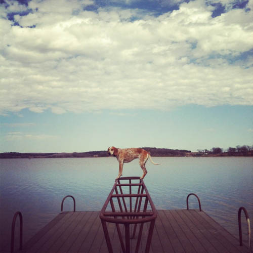 Madie on things - cão - lago