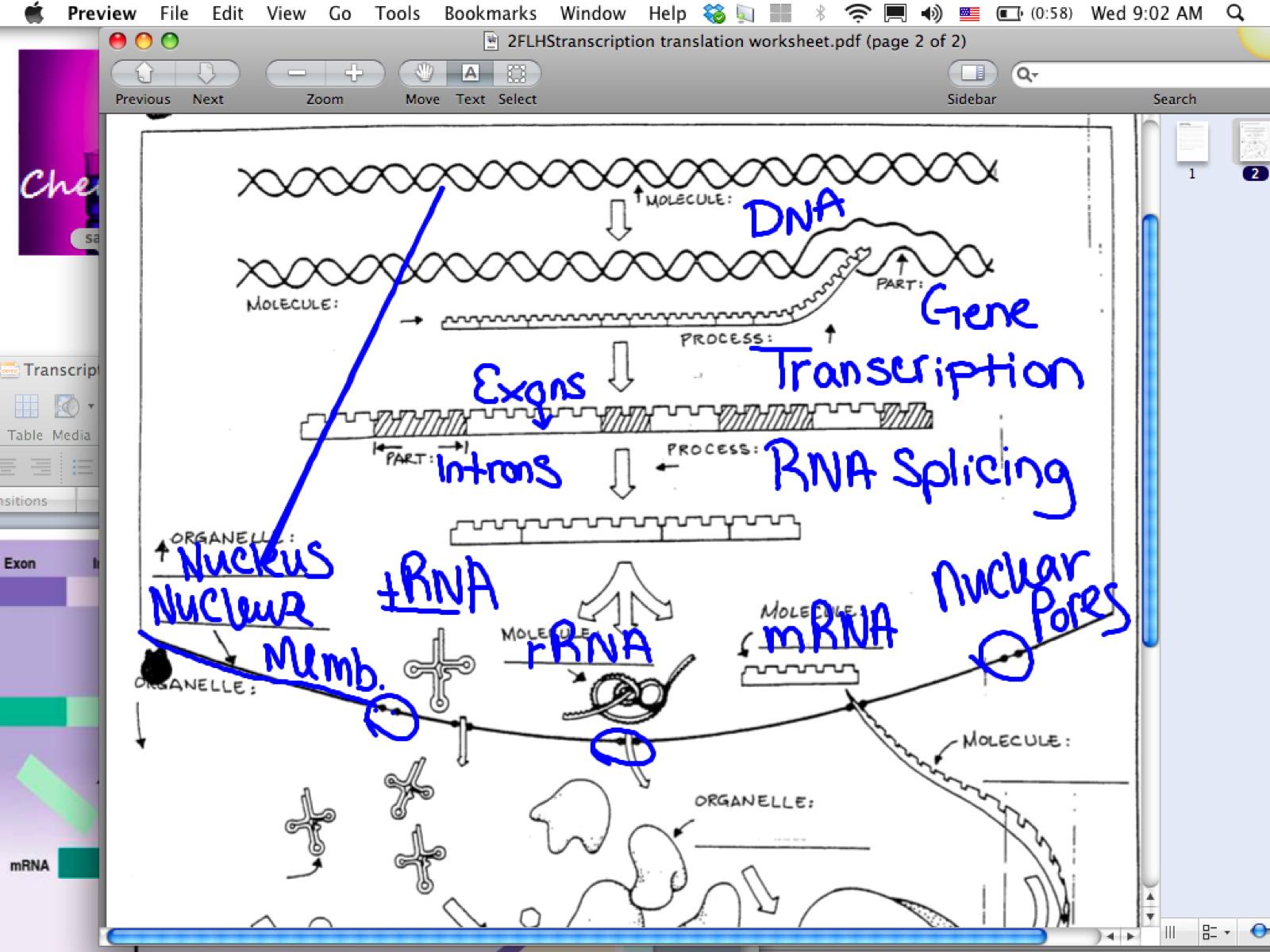 Free Worksheets dna mutations worksheet : EC Honors Biology: April 2013