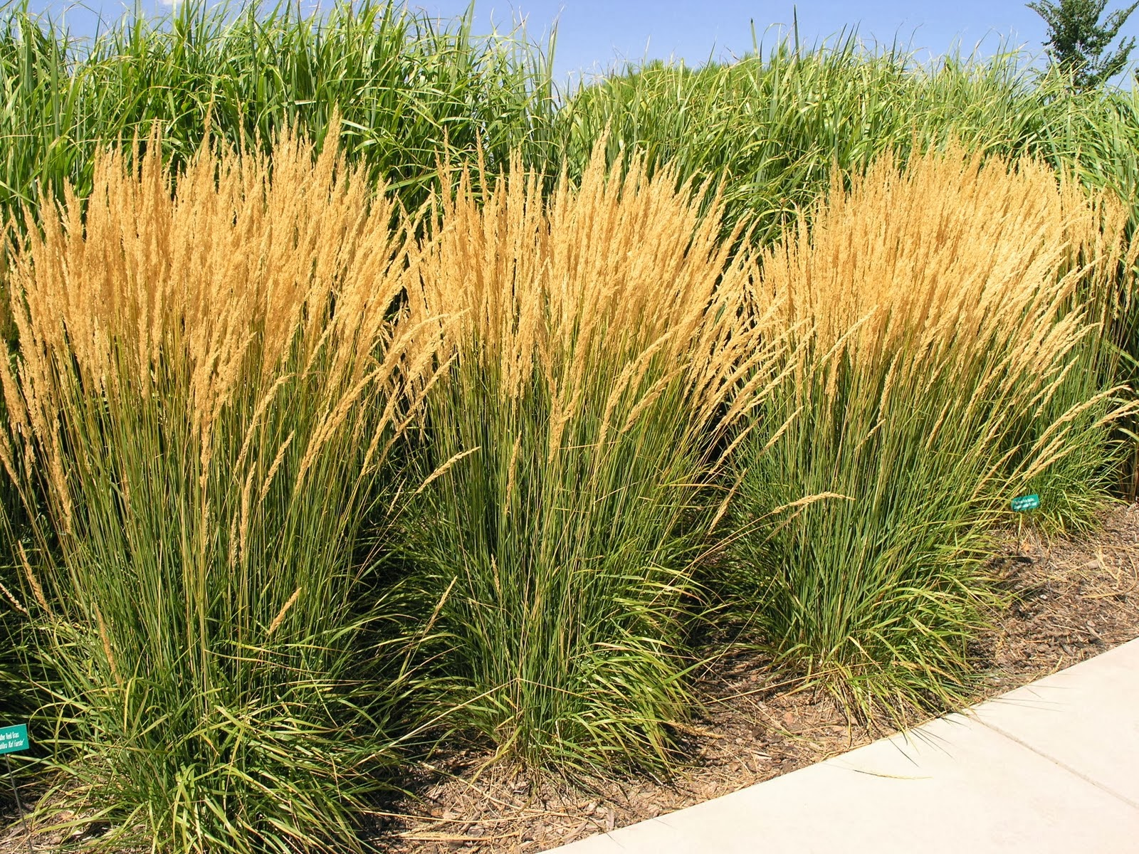 Plants ridiculousness sway bob and quiver part 2 for Full sun ornamental grass