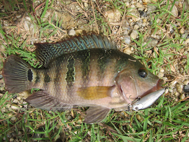 Lure haven sharing the passion of luring a short getaway for Pond fish species