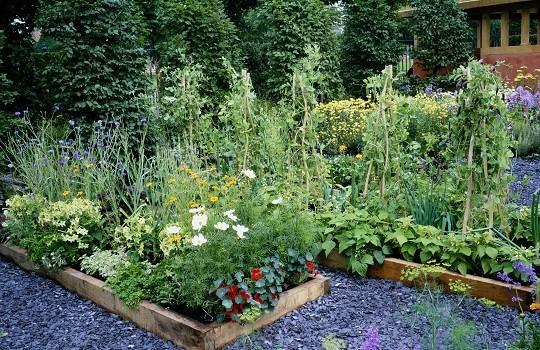 Huertas organicas urbanas for Plantas para huerta organica
