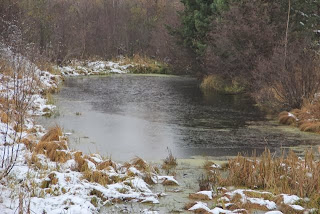 snow fringed pond covered with ice