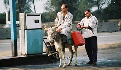 Funny Donkey Filling Petrol