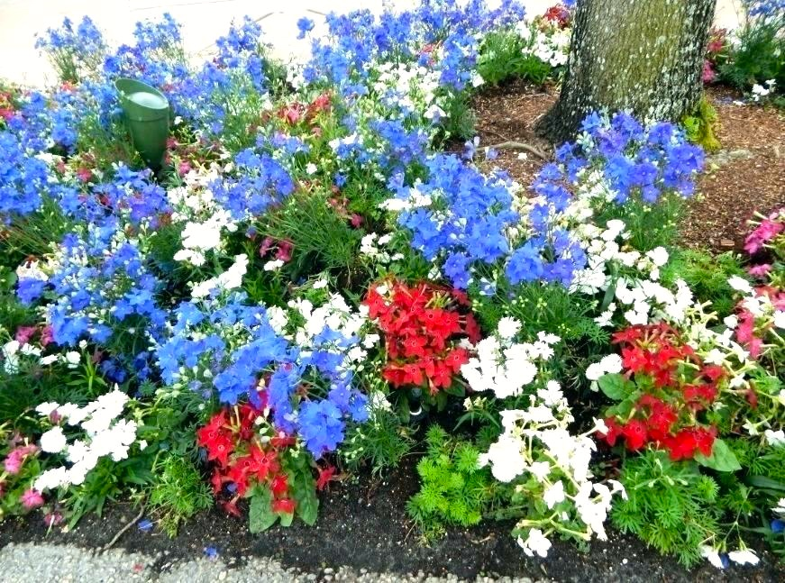 Two Men and a Little Farm: RED WHITE BLUE FLOWERS INSPIRATION THURSDAY