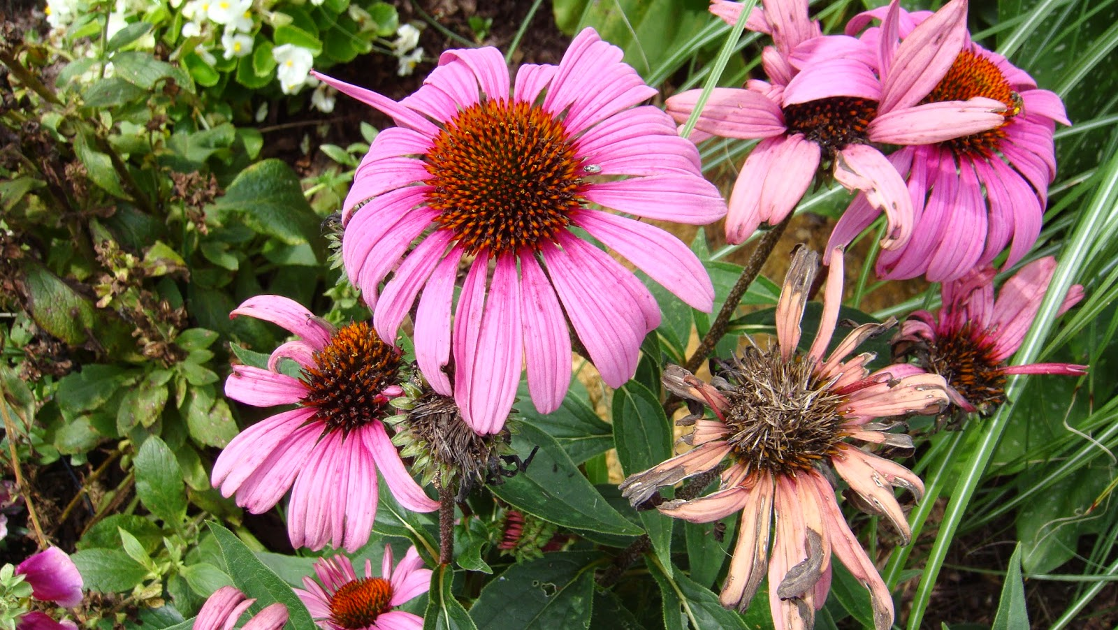 Line Drawing Coneflower : Crafting diy projects decorating