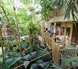 Jungle Lodge Center Parcs