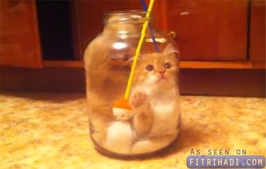kucing jatuh dalam balang