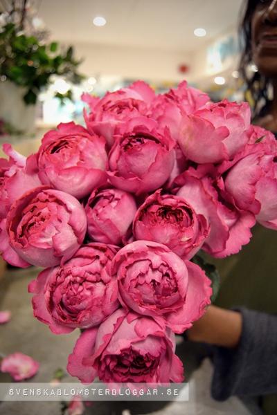 rose Yves Piaget, ros Yves Piaget