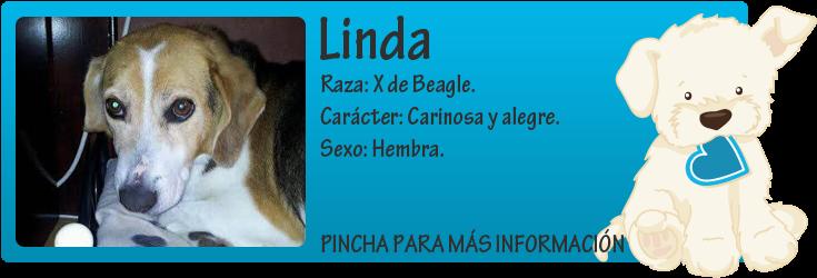 http://mirada-animal-toledo.blogspot.com.es/2014/07/linda-una-triste-historia.html
