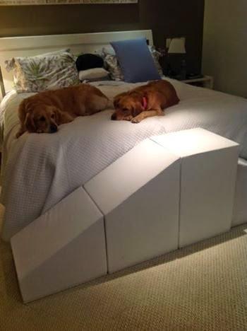 cães grandes subindo em cama alta