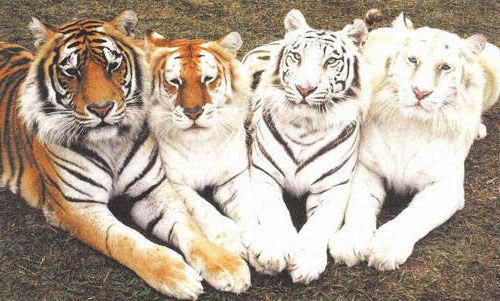 Albino And Melanistic Animals