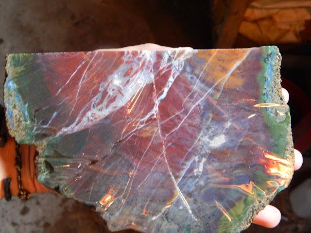 Panca Warna Macan Berdarah Serat Petir Sumbawa