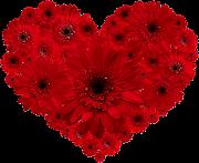 Rosa, flor de laranjeira. Manoel Bandeira (heartredflower)