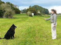 Como adestrar um cão: O comando Sente!