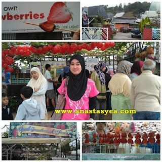 Strawberry Park Cameron Highlands