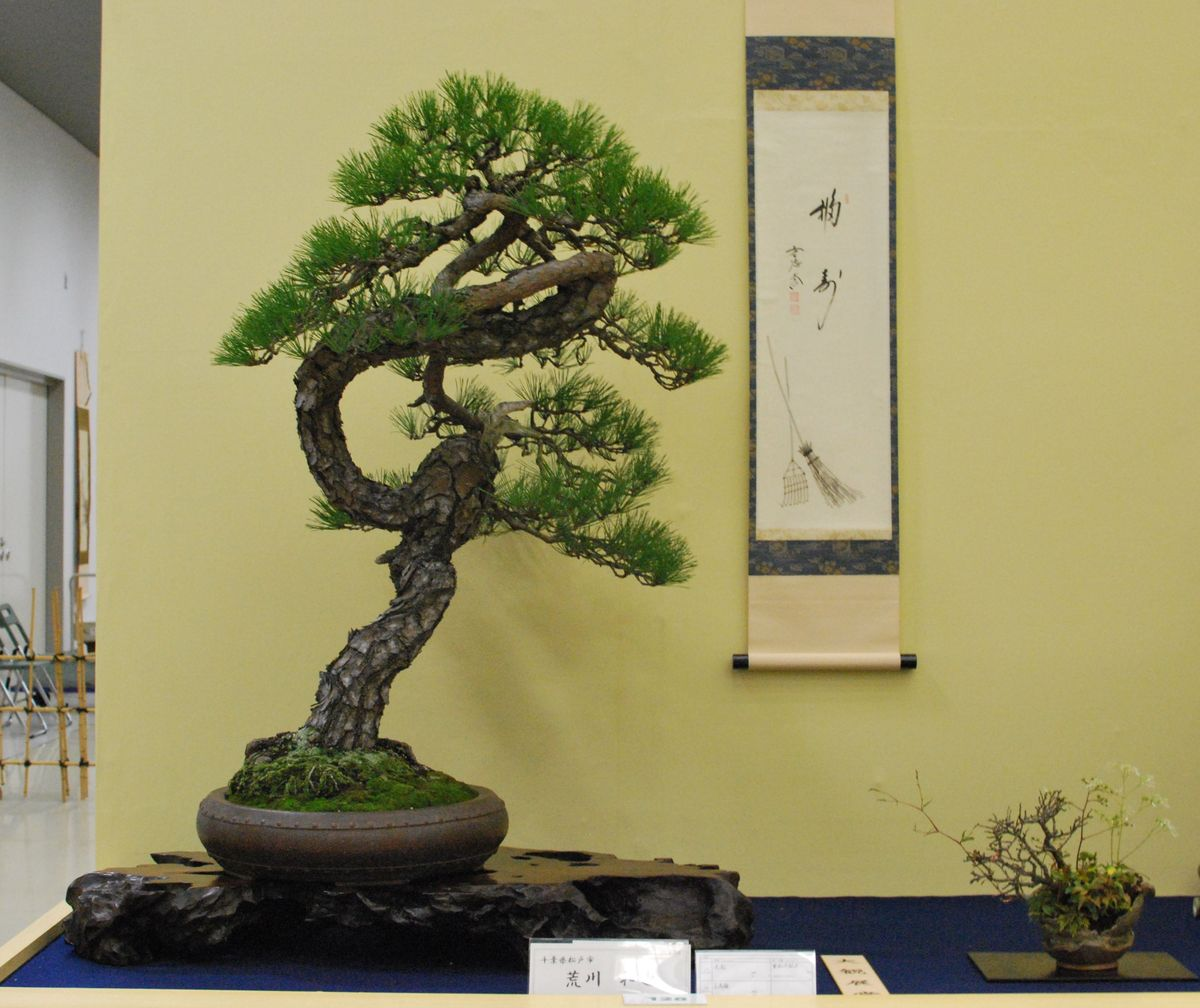 bonsai tree 23 awesome japan bonsai pictures. Black Bedroom Furniture Sets. Home Design Ideas