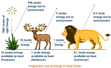 10 Law For Transfer Of Energy From One Trophic Level To Next