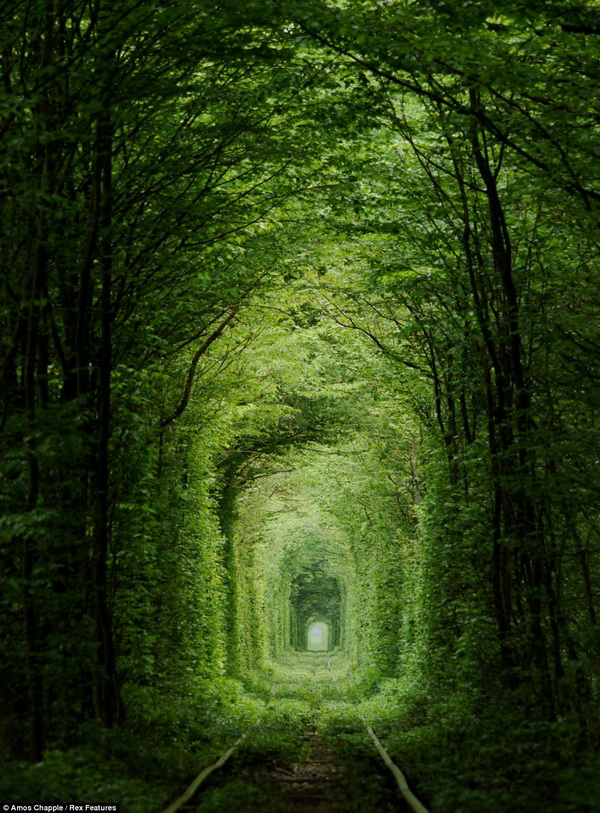 Leafy Green 'Tunnel of Love' in Ukraine