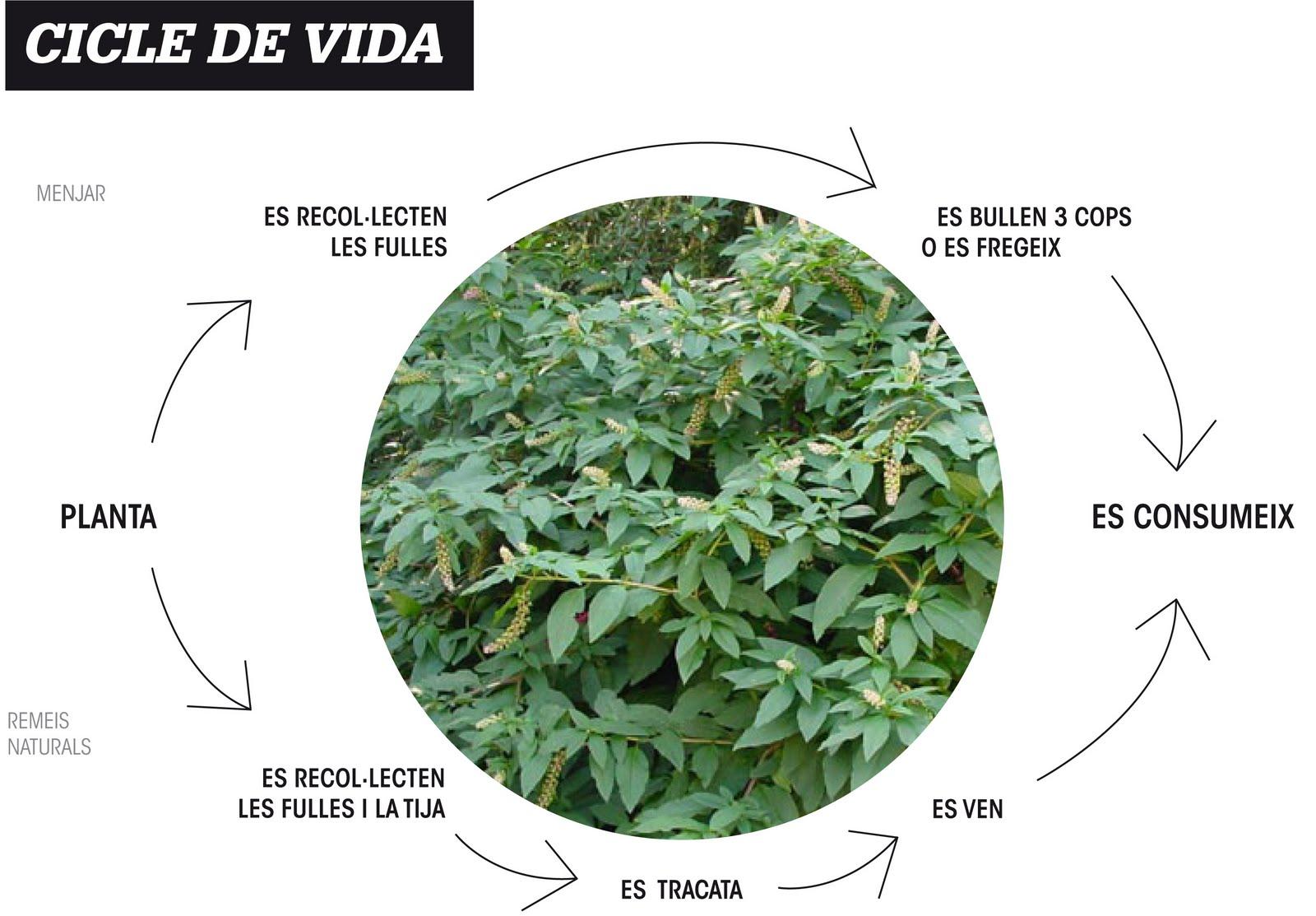 Bi nica esdi 09 10 plantes medicinals en sabadell - Esdi sabadell ...