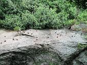 Pássaros descansando na Urca