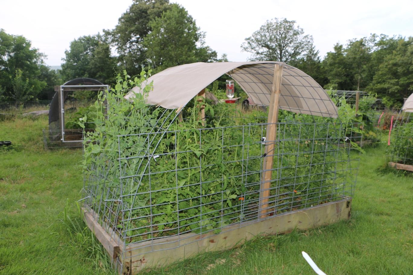 The Valhalla Project Valhalla 39 S Vegetable Garden Renovation Summer 2015