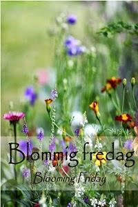 Blommig fredag - Bland rosor och bladlöss