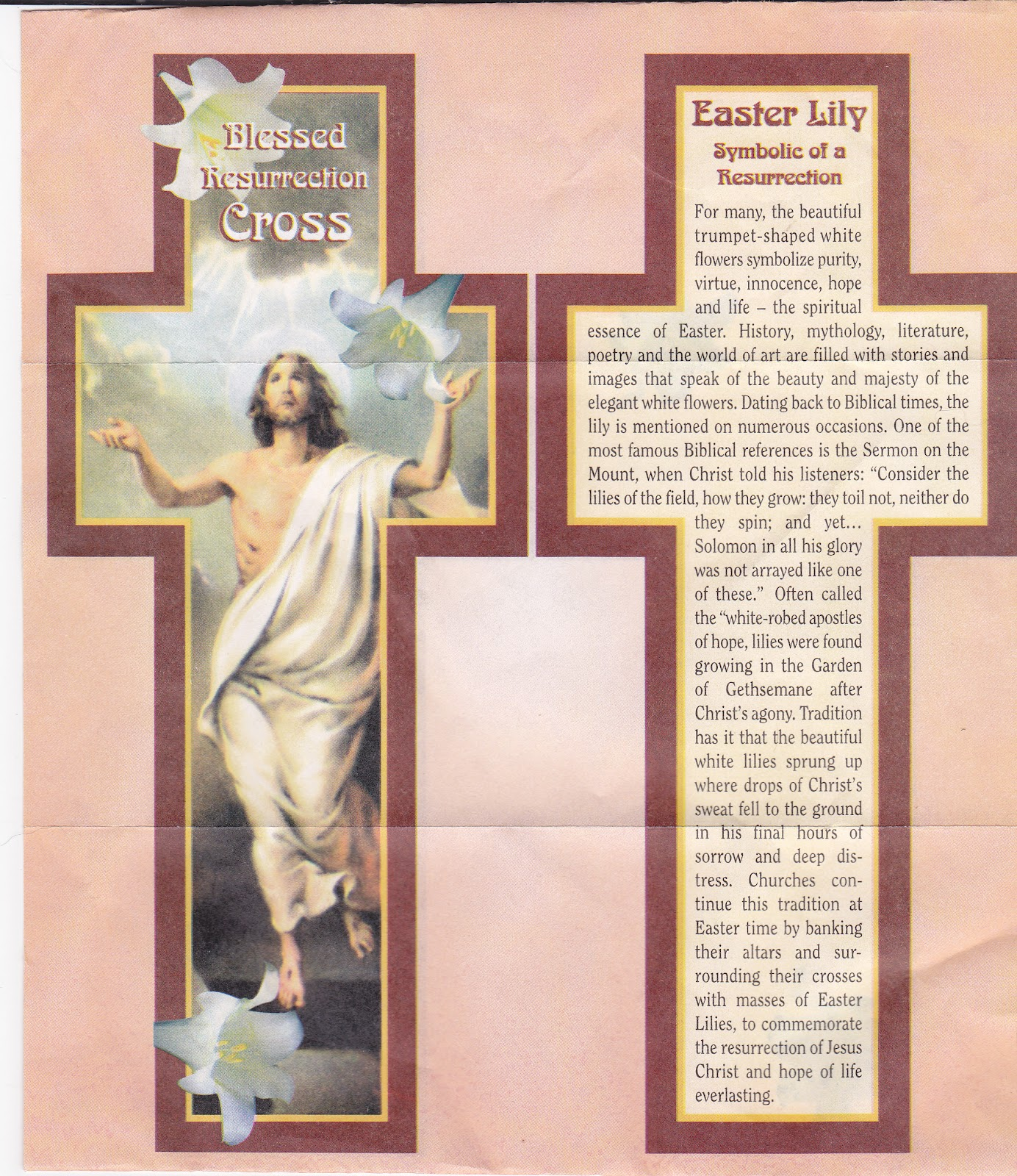 Amazing grace my chains are gone about the easter lily about the easter lily biocorpaavc Choice Image