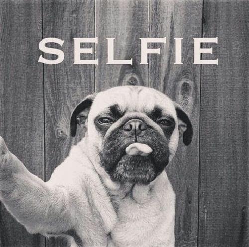 selfie - dog image - pug