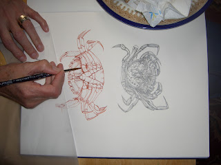 drawing crabs