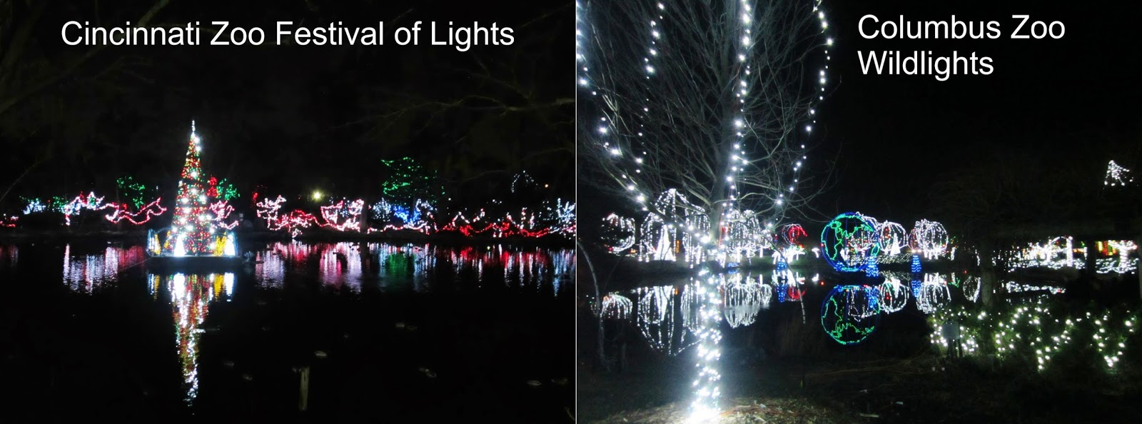 this is a comparison between the cincinnati zoos festival of lights and the columbus zoos wildlights when christmas time came around dayton ohio