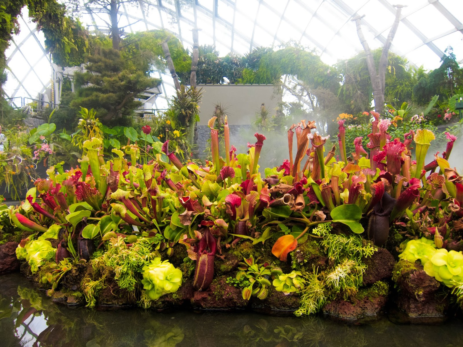Insect-eating plants in pond in Cloud Forest, Gardens by the Bay in Singapore | Svelte Salivations - Travel