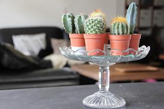 Regards et Maisons Cactus