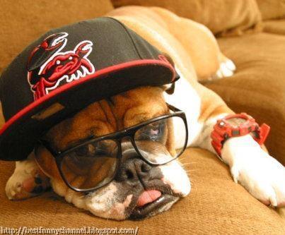 Dog baseball.