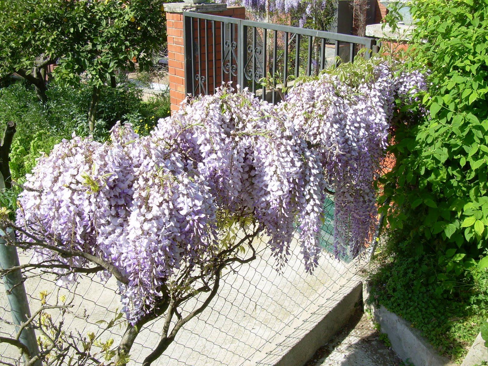 Flores - Plantas que aguanten el sol ...