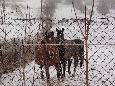 konie, kuce, jazda konna, jazda w trenie, kulig, jazda na sankoach, zaprzęg z kucykami