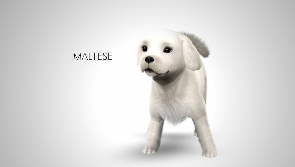 Dogs that look like maltese