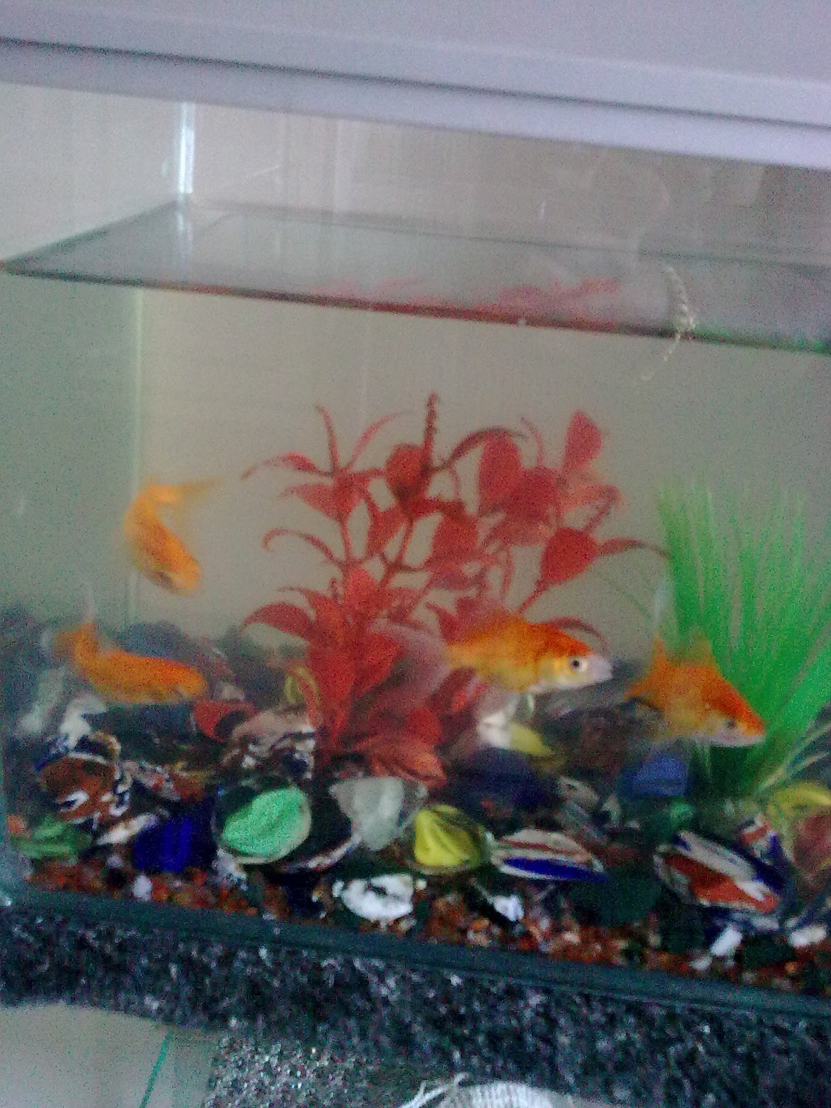 feng shui simple cures why fishes die feng shui for