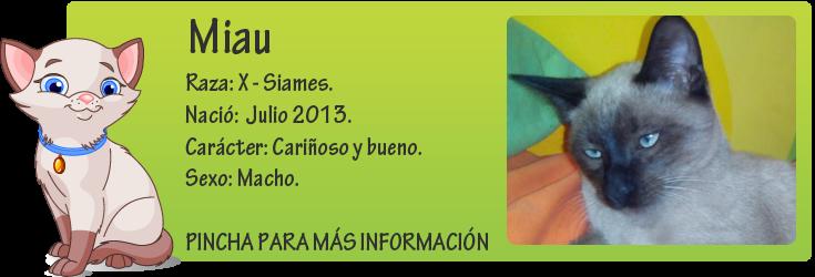 http://mirada-animal-toledo.blogspot.com.es/2013/10/miau-x-siames-en-adopcion.html